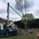 Carolina Tree Works Rock Hill SC Tree Removal